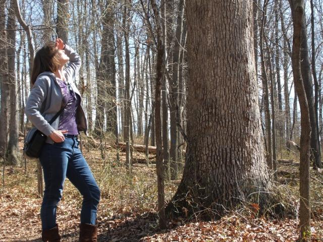 Me, staring up at a big tree.