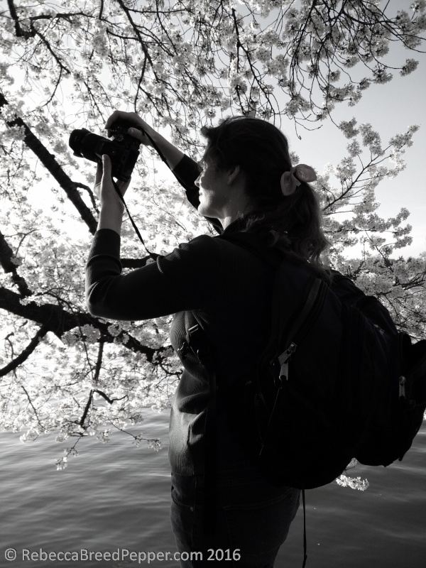photographing-cherry-blossoms