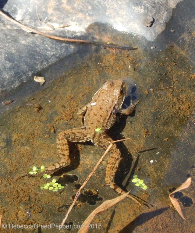 Amphibian 2