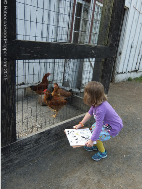 Checking for Chickens