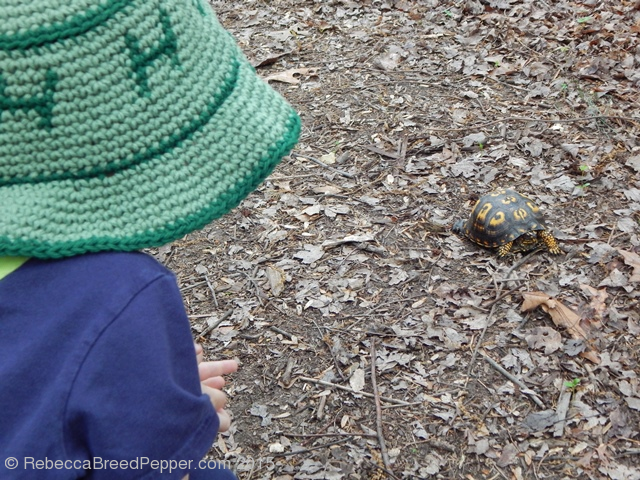 child watching box turtle