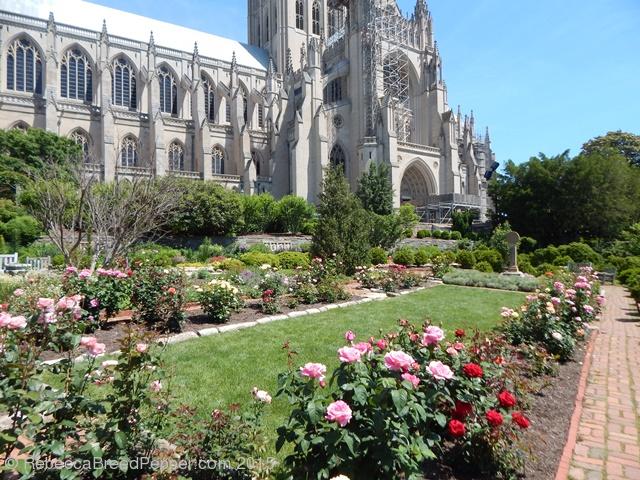 rose garden from corner