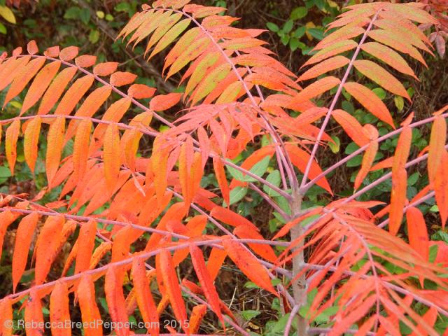 Bright Bright Leaves