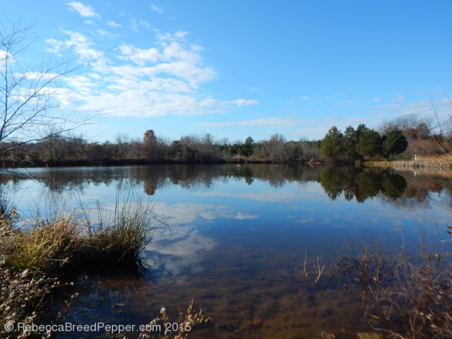 Frogshackle Pond 20151124
