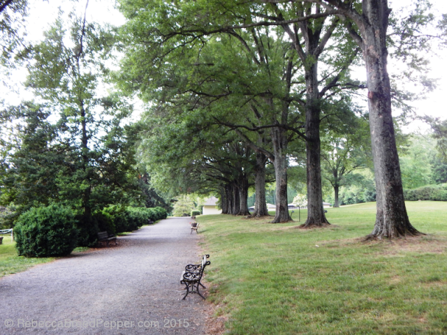 Line of Trees 2