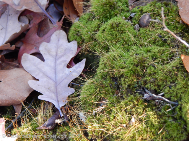 Moss and Leaves 20151124