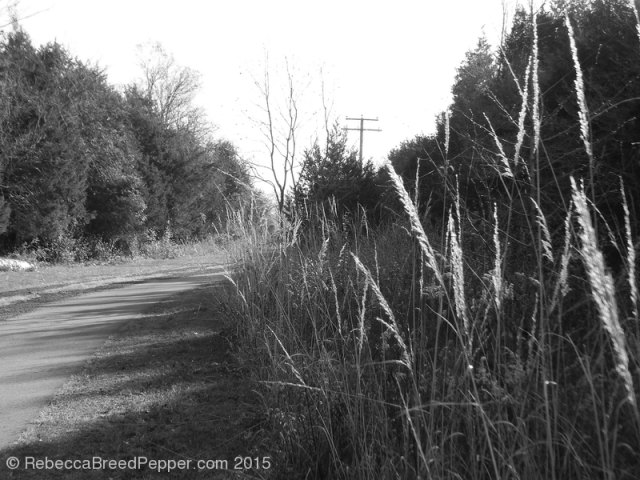 Path and Grass 20151124