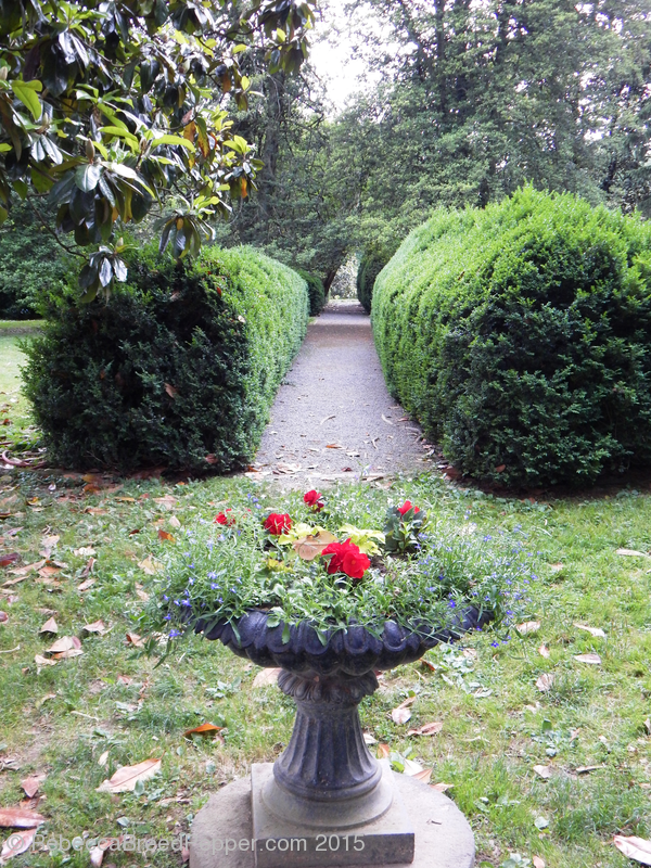 Planter and Hedges