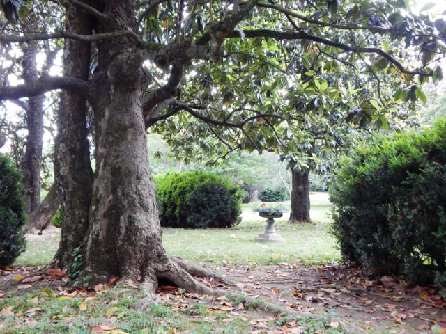 Planter Under Magnolia