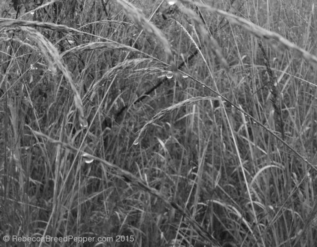 Rain on Grass 20151119