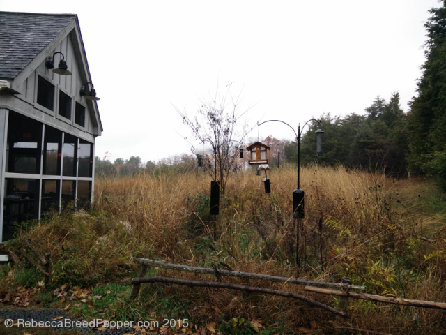 Visitor's Center Birdfeeders 20151124