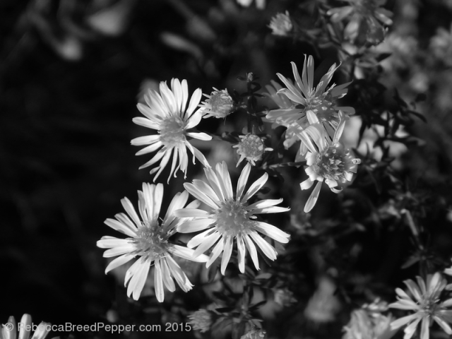 White Flowers 20151124