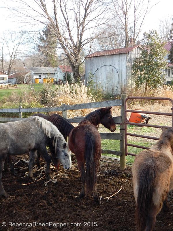 Horses 20151209