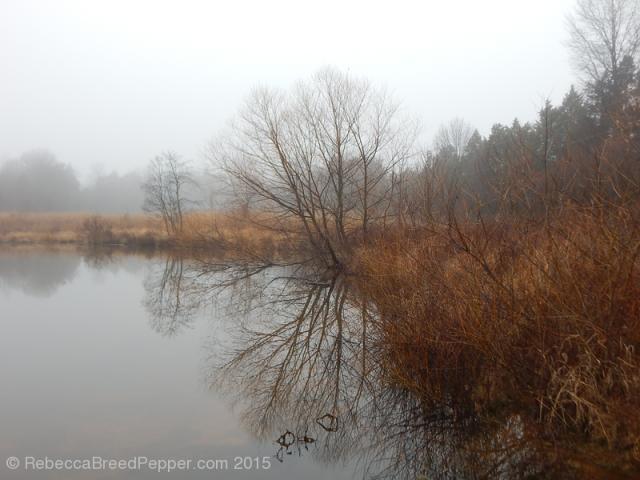 Morning Pond 20151227