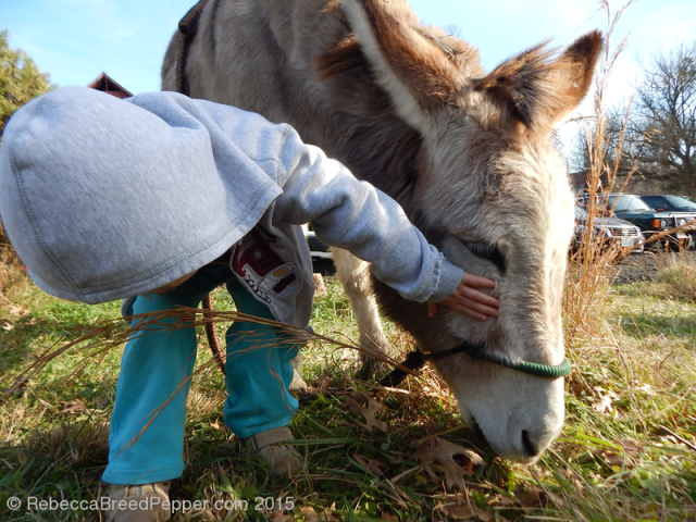 Petting the Donkey 20151207