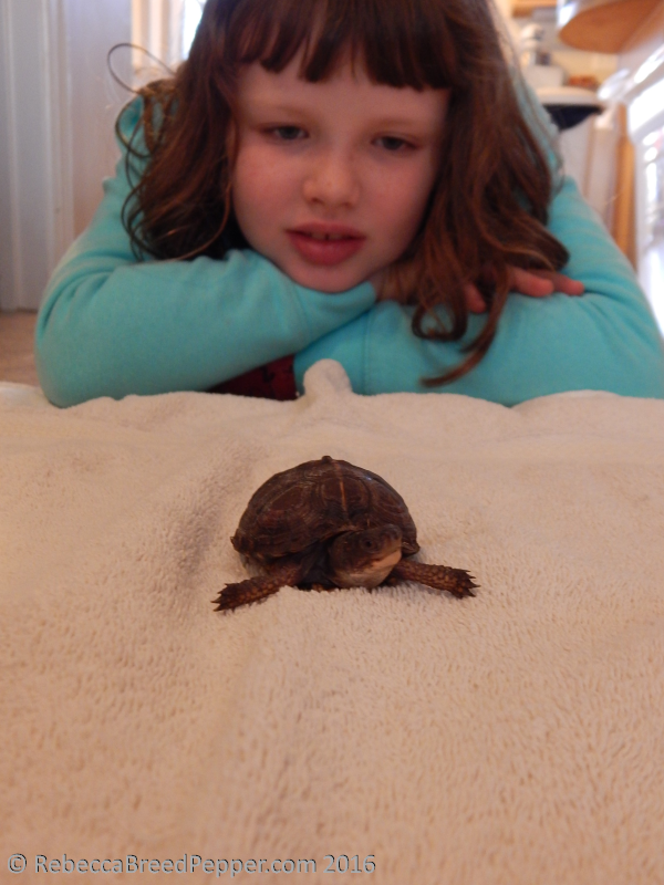 Betsy with Baby Turtle