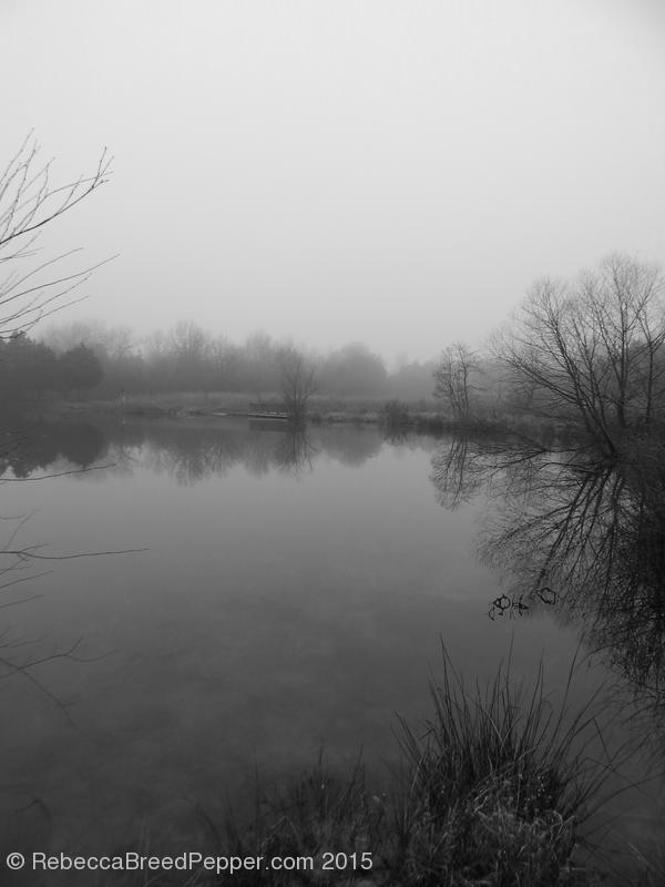 Frogshackle Pond 20151227