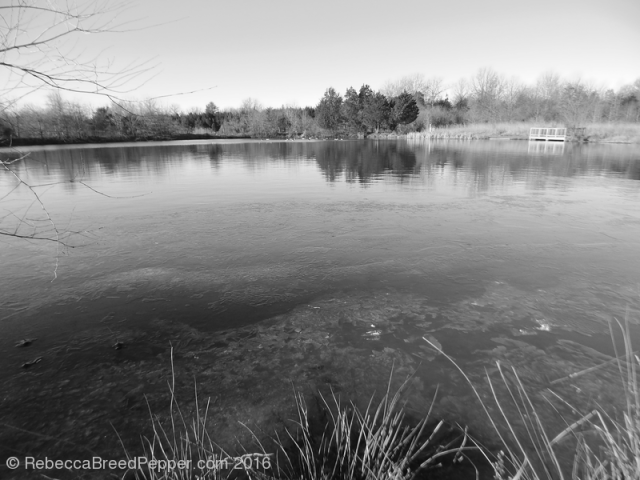 Frogshackle Pond 20160105