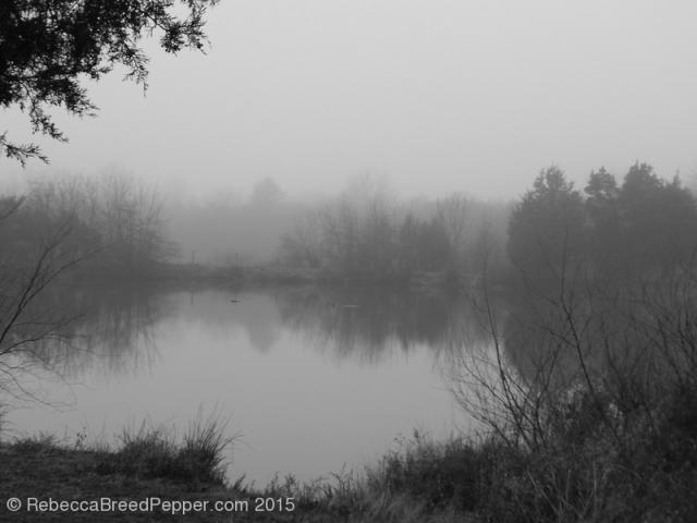 Frogshackle Pond2 20151227