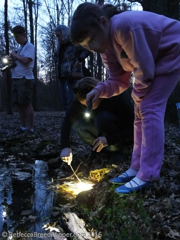 Betsy Shining a Flashlight into the Vernal Pool