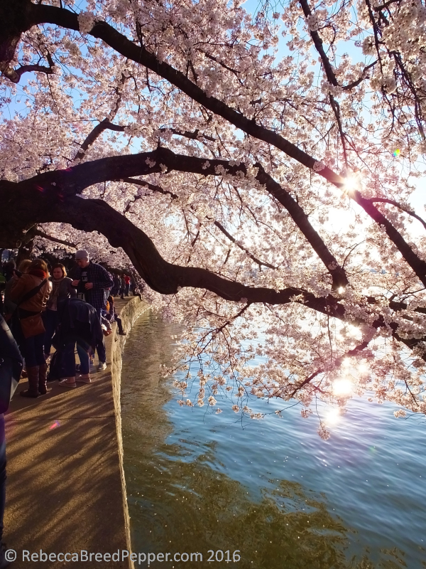 Blossoms and People