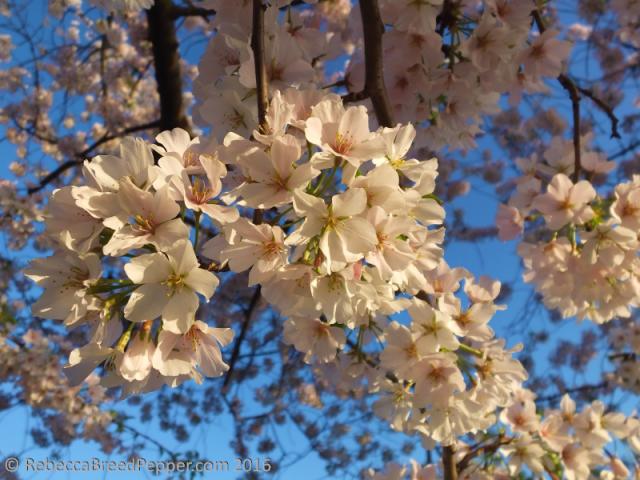 Blossoms Close Up 2