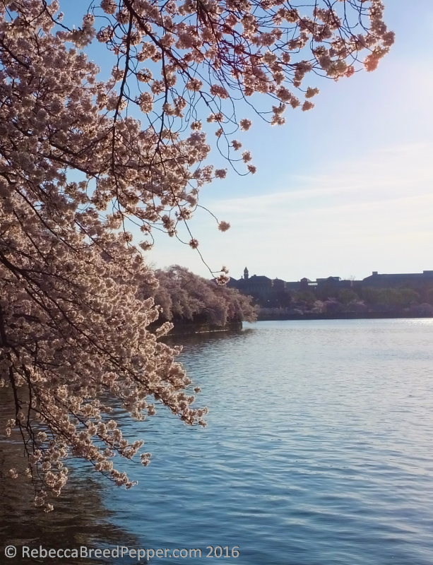 Blossoms with Castle in Background