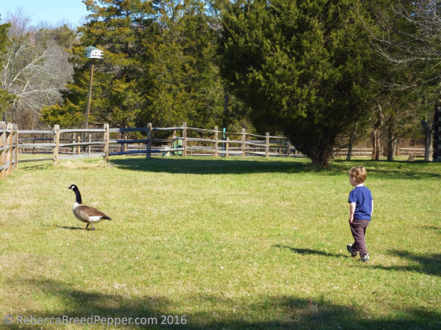 Boy and Goose