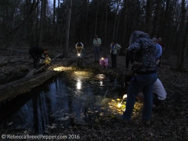 Exploring the Vernal Pool