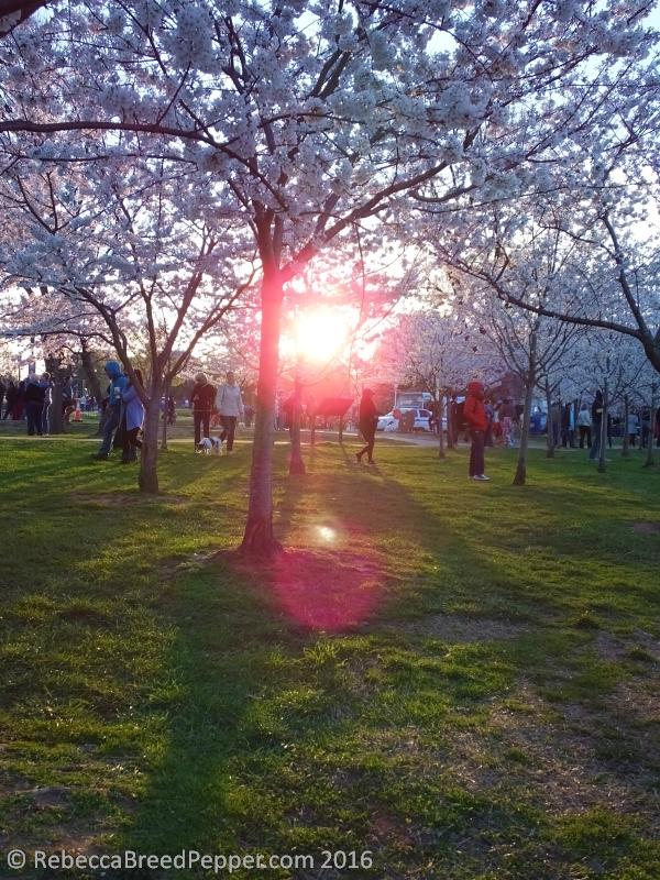 Just After Sunrise