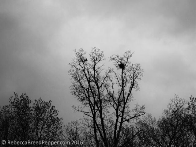Crow's Nest at the Top of the Tree