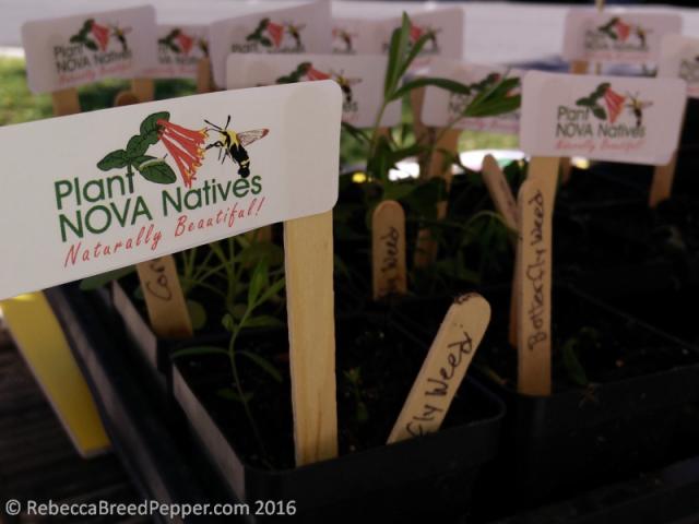 NoVA Natives