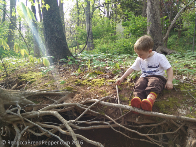 Henry on Tree Roots 2
