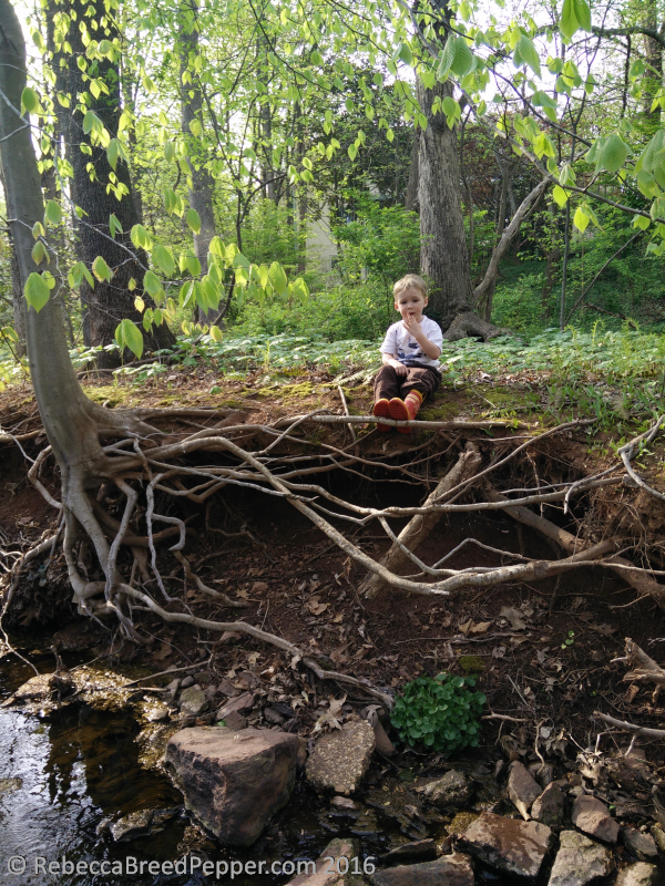 Henry on Tree Roots