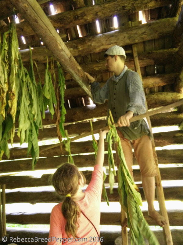 Hanging Tobacco in the Barn