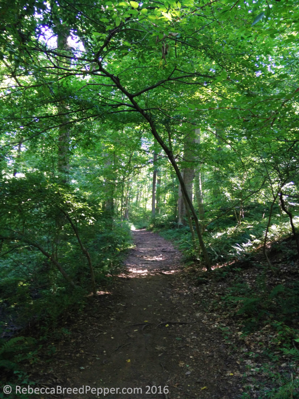 Path with Ferns and Leaning Tree