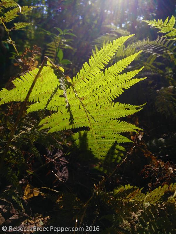 fern-finds-her-light-no-1