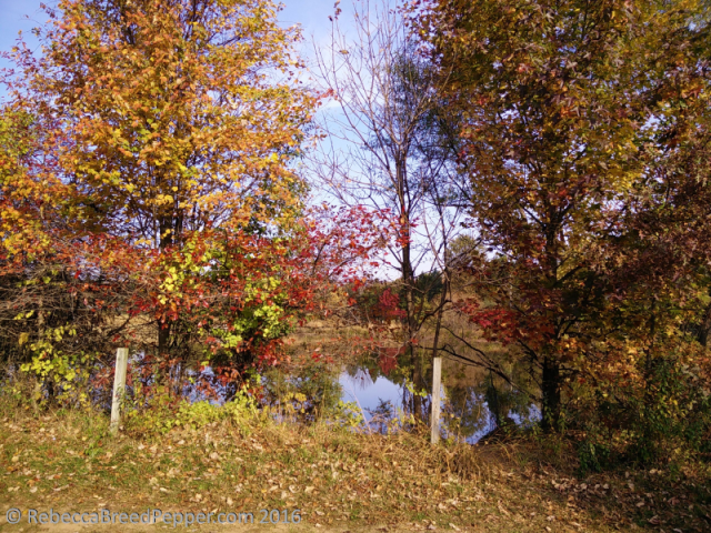 frogshackle-pond-colors