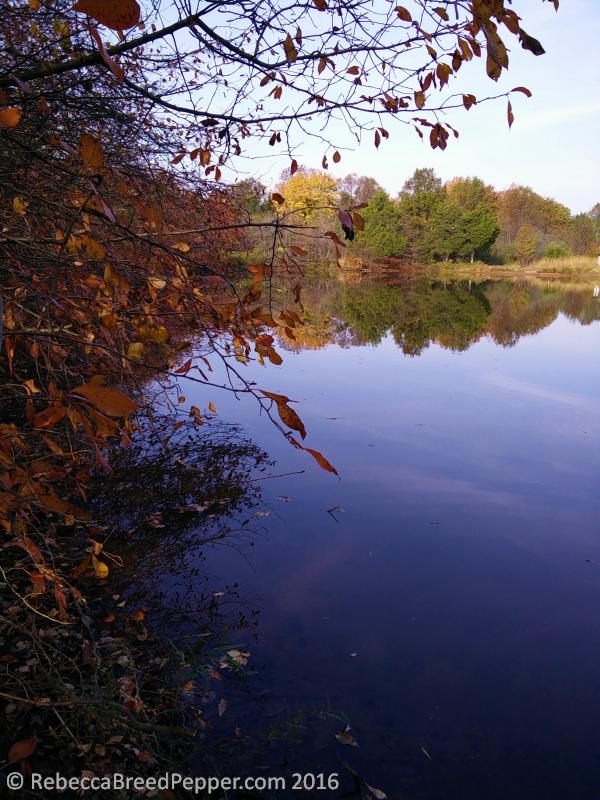 frogshackle-pond