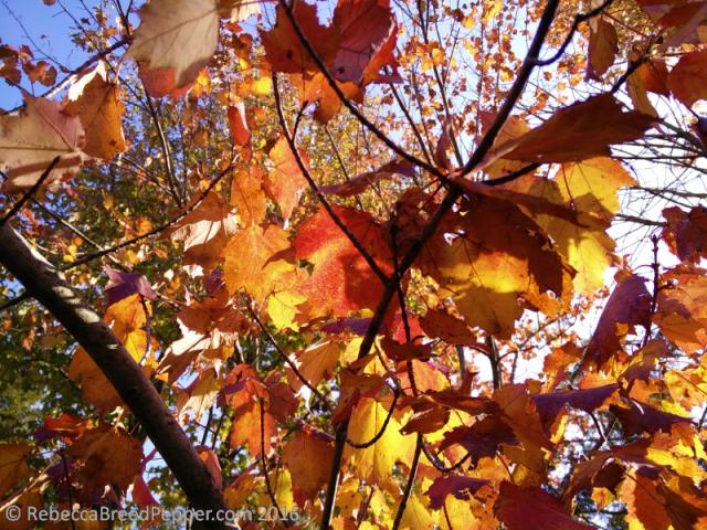 leaves-from-below