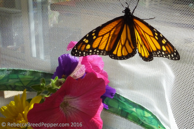 monarch-with-flowers