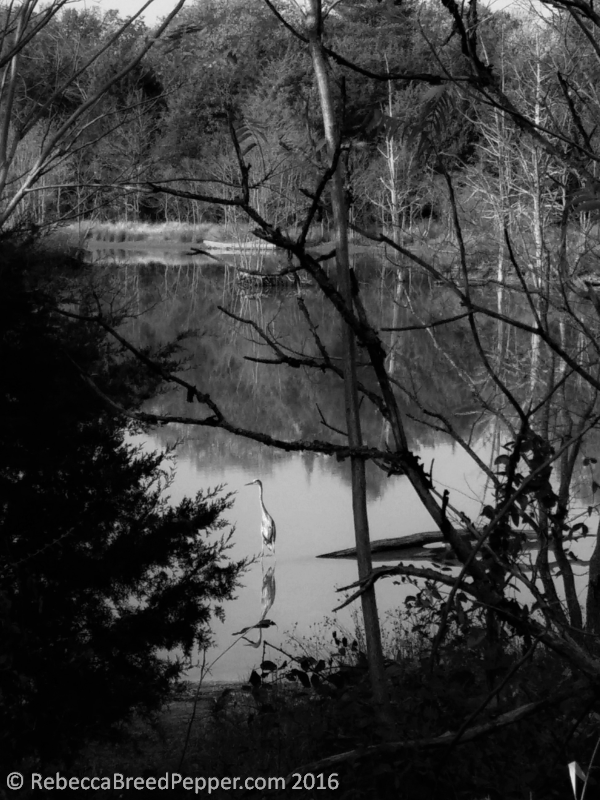 pond-and-heron-bw