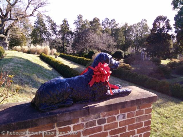 garden-dog
