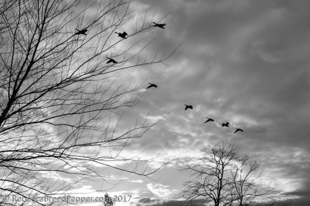 geese-trees-and-clouds-bw