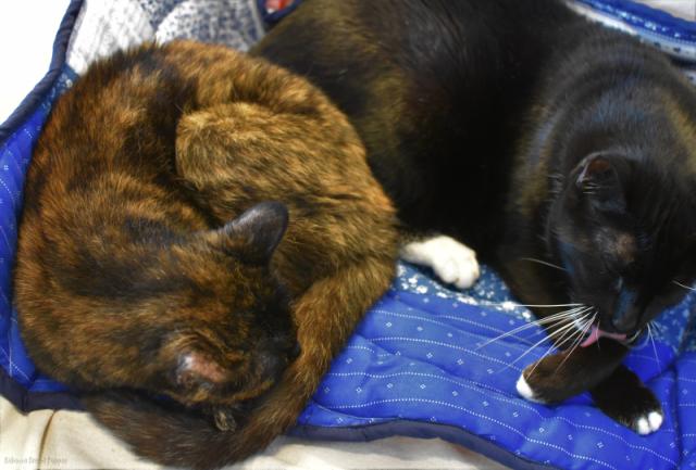 Kitties on Quilt