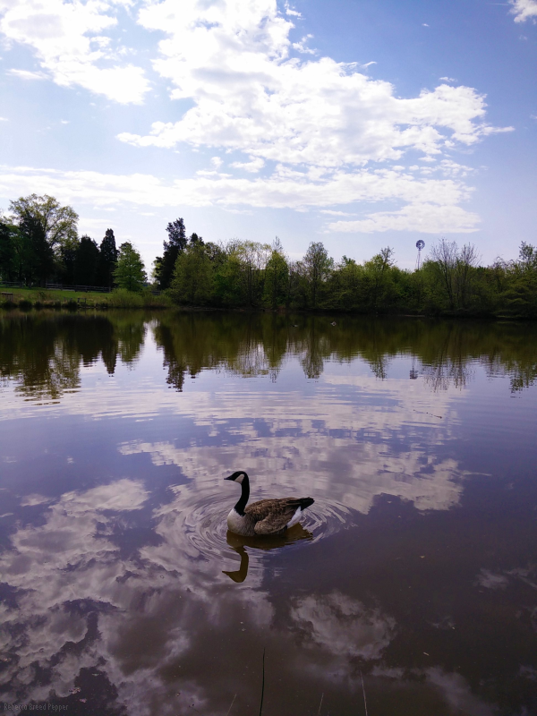 Goose in the Clouds