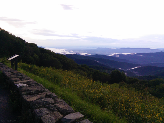 Skyline Drive with Mist at Dusk