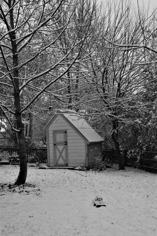 Snow on Potting Shed