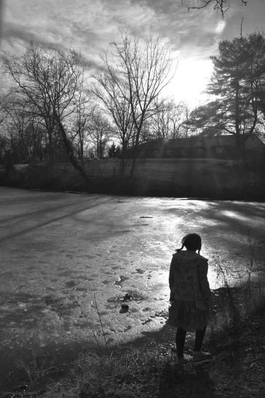 Pond Gazing