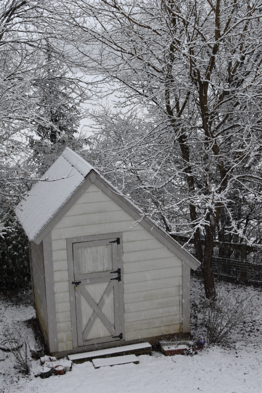 Snow on the Potting Shed